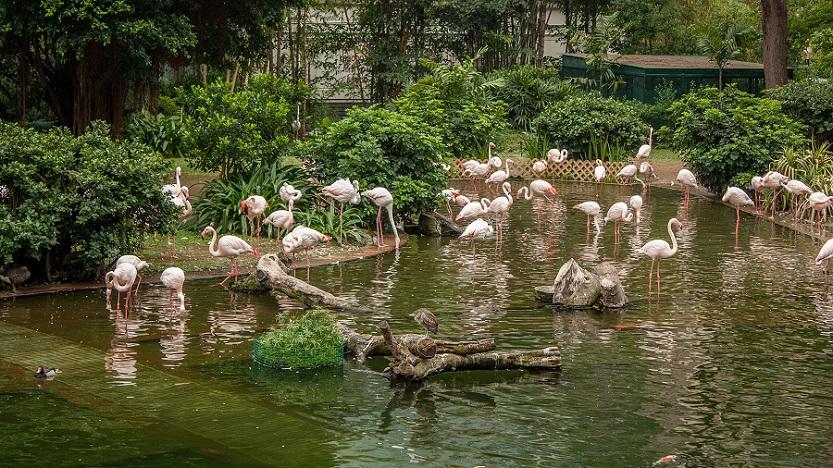 Los famosos flamencos de Kowloon Park