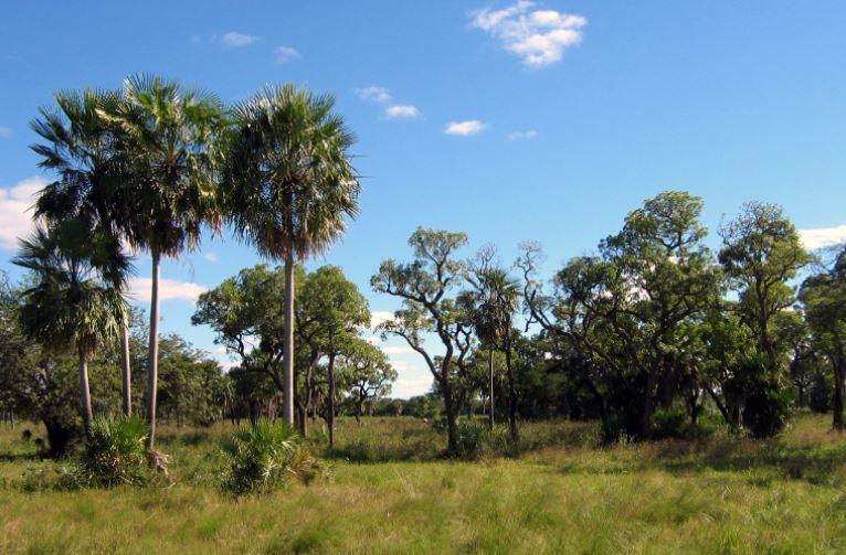 Gran Chaco Paraguay