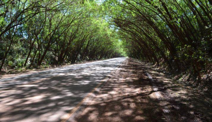 Túnel de árboles Paraguay